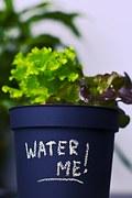 plant-931932__180