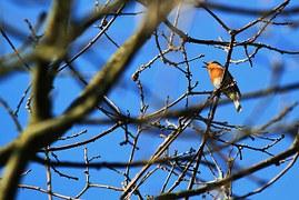 bird-287109__180