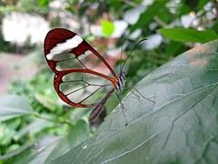 butterfly-1685728__180