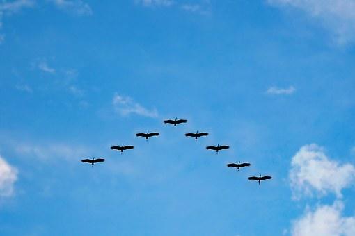 birds-216827__340