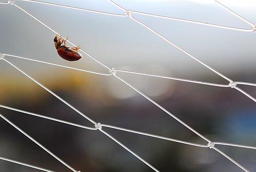 ladybug-1599010__340