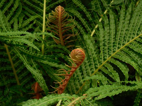 fronds-290848__340