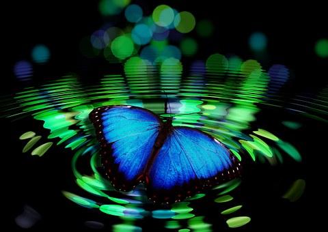 butterfly-492536__340